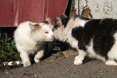 Περιπλανώμενο sniff γατών μεταξύ τους Στοκ φωτογραφία με δικαίωμα ελεύθερης χρήσης