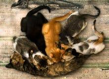 Περιποίηση γατών στοκ εικόνα