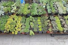 Περιποίηση εγκαταστάσεων κηπουρικής στοκ φωτογραφίες με δικαίωμα ελεύθερης χρήσης