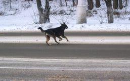 Περιπλανώμενα σκυλιά στην οδό στοκ φωτογραφίες με δικαίωμα ελεύθερης χρήσης