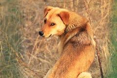 Περιπλανώμενα σκυλιά στοκ φωτογραφίες