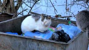 Περιπλανώμενες γάτες αλεών σε ένα δοχείο απορριμάτων στη μεγάλη πόλη φιλμ μικρού μήκους