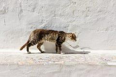 Περιπλανώμενη γάτα έξω Στοκ Εικόνες