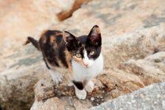 Περιπλανώμενη γάτα μαύρο και καφετί λ Στοκ Εικόνες