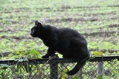 Περιπλανώμενη γάτα Στοκ φωτογραφίες με δικαίωμα ελεύθερης χρήσης