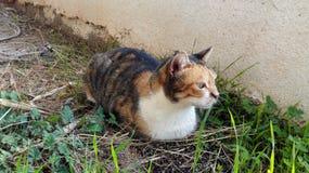 Περιπλανώμενη γάτα Στοκ Φωτογραφία