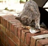 Περιπλανώμενη ζωή γατών στοκ φωτογραφία