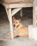 Περιπλανώμενη καφετιά μιγάς προστασία σκυλιών στο εργοτάξιο οικοδομής Στοκ φωτογραφία με δικαίωμα ελεύθερης χρήσης