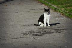 Περιπλανώμενη συνεδρίαση γατών στην οδό Στοκ Εικόνες