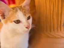 Περιπλανώμενο γατάκι που βρίσκεται στο έδαφος Στοκ Εικόνα