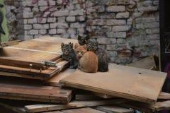 Περιπλανώμενο γατάκι τέσσερα Στοκ Εικόνες