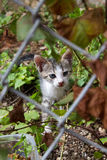 Περιπλανώμενο γατάκι Στοκ φωτογραφία με δικαίωμα ελεύθερης χρήσης