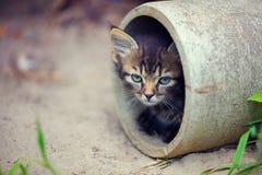 Περιπλανώμενο γατάκι Στοκ εικόνες με δικαίωμα ελεύθερης χρήσης