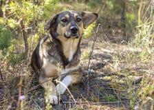 Περιπλανώμενο σκυλί στα ξύλα, πεινασμένος και κουρασμένος Στοκ φωτογραφίες με δικαίωμα ελεύθερης χρήσης