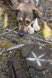 Περιπλανώμενο σκυλί στα ξύλα, πεινασμένος και κουρασμένος Στοκ Εικόνες
