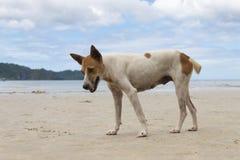 Περιπλανώμενο σκυλί στην παραλία Στοκ φωτογραφία με δικαίωμα ελεύθερης χρήσης