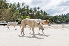 Περιπλανώμενο σκυλί στην παραλία Στοκ εικόνα με δικαίωμα ελεύθερης χρήσης