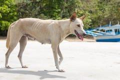 Περιπλανώμενο σκυλί στην παραλία Στοκ Φωτογραφίες