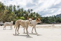 Περιπλανώμενο σκυλί στην παραλία Στοκ Φωτογραφία