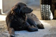 Περιπλανώμενο σκυλί στο Μπακού, πρωτεύουσα του Αζερμπαϊτζάν Στοκ φωτογραφία με δικαίωμα ελεύθερης χρήσης