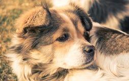 Περιπλανώμενο σκυλί στοκ φωτογραφία