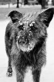 Περιπλανώμενο σκυλί Στοκ Εικόνες