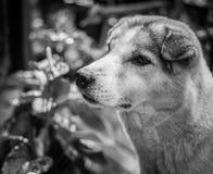 Περιπλανώμενο σκυλί Στοκ Φωτογραφίες