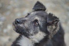 Περιπλανώμενο σκυλί Στοκ εικόνα με δικαίωμα ελεύθερης χρήσης