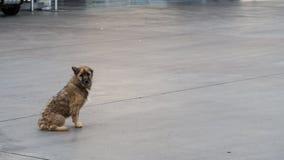 Περιπλανώμενο σκυλί στοκ εικόνες με δικαίωμα ελεύθερης χρήσης