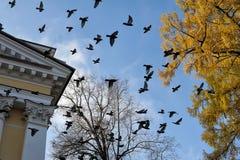 περιστέρια αέρα Στοκ φωτογραφίες με δικαίωμα ελεύθερης χρήσης