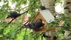 Περιστέρια γύρω από τους τροφοδότες πουλιών απόθεμα βίντεο