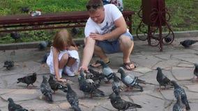 Περιστέρια ευτυχών πατέρων και λίγων τροφών κορών στο θερινό πάρκο απόθεμα βίντεο