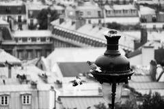 Περιστέρια και ένα φανάρι στο Παρίσι Στοκ φωτογραφία με δικαίωμα ελεύθερης χρήσης