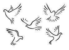 Περιστέρια και περιστέρια καθορισμένα διανυσματική απεικόνιση