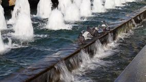 Περιστέρια κοντά στη λίμνη απόθεμα βίντεο