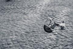 Περιστέρια που πετούν μακριά σε μια βιασύνη στοκ εικόνα