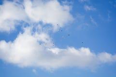 Περιστέρια που πετούν, μπλε ουρανός, άσπρα σύννεφα p2 Στοκ εικόνες με δικαίωμα ελεύθερης χρήσης