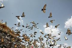 Περιστέρια που πετούν στο μπροστινό παλάτι Hawa Mahal Ινδία Jaipur στοκ εικόνες