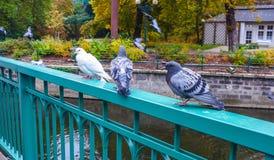 Περιστέρια που στέκονται σε μια πράσινη γέφυρα ραγών στοκ εικόνες