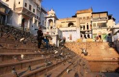Περιστέρια που ταΐζουν κοντά στην ιερή λίμνη, Pushkar, Ινδία Στοκ φωτογραφία με δικαίωμα ελεύθερης χρήσης