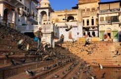 Περιστέρια που ταΐζουν κοντά στην ιερή λίμνη, Pushkar, Ινδία Στοκ Εικόνα