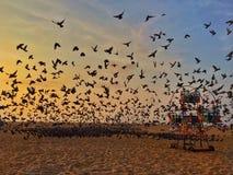 Περιστέρια στην ανατολή στην παραλία Στοκ εικόνες με δικαίωμα ελεύθερης χρήσης