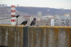 Περιστέρια στη στέγη της σοβιετικής πολυκατοικίας στοκ φωτογραφίες με δικαίωμα ελεύθερης χρήσης