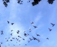 Περιστέρια στον ουρανό στοκ φωτογραφία με δικαίωμα ελεύθερης χρήσης