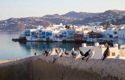 Περιστέρια στο ελληνικό νησί Μύκονος υποβάθρου στοκ εικόνα