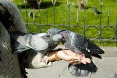 Περιστέρια τροφοδοτούσα χέρι - Λα Παζ - Βολιβία Στοκ Εικόνα