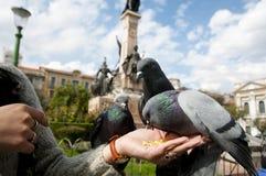 Περιστέρια τροφοδοτούσα χέρι - Λα Παζ - Βολιβία Στοκ Φωτογραφία