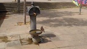 Περιστέρι που απολαμβάνει το νερό στοκ φωτογραφίες