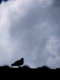 Περιστέρι που στέκεται στη στέγη Στοκ Εικόνες