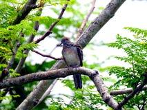 Περιστέρι σε ένα δέντρο στοκ εικόνα